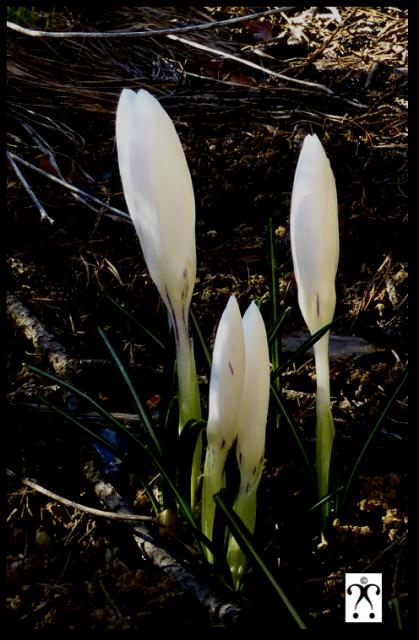 Le printemps est arrivé !