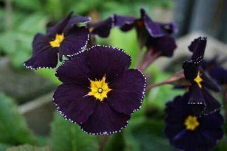 de bien jolies fleurs ....