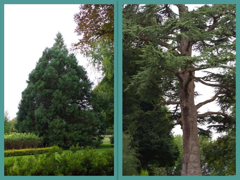 41700   Chateau de Cheverny  les jardins