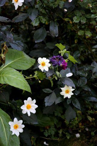 L'automne au jardin (2/4)
