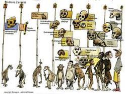 végétarisme, omnivorisme, carnivorisme, boulimisme, végétalisme, véganisme, anorexisme, apocalypse, vie éternelle