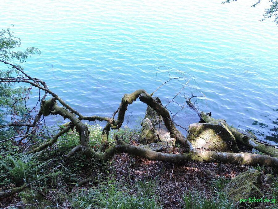 le lac Pavin - Puy de Dome (63)