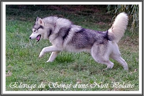 IROKO des Rêves de Neige