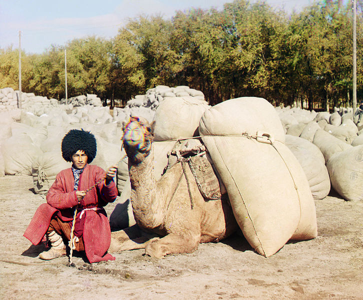 File:Turkmen man with camel.jpg