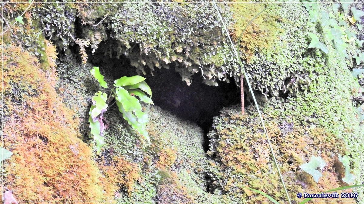 Réserve géologique de Saucats - Août 2016 - 6/10