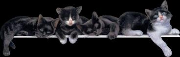 Chats retrouvés dans l'hérault en 2014