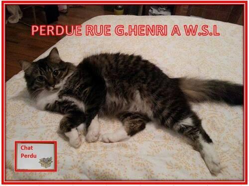 Wolu1200 : Encore une chatte perdue, cette fois-ci avenue Georges-Henri