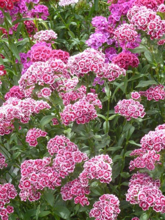 """""""Juin en fleurs"""" ..."""