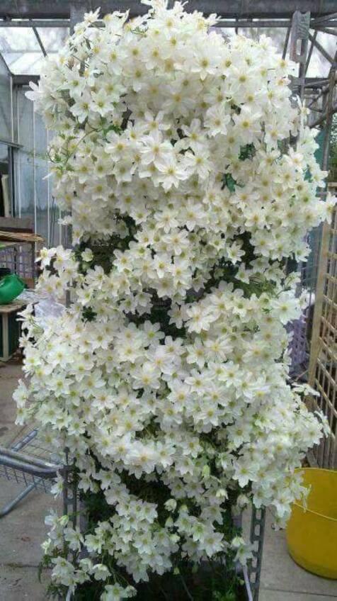 L'image contient peut-être: plante, fleur et plein air