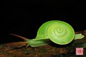Un escargot vert, qui glissait dans l'herbe ...