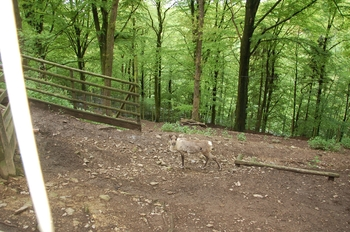 Parc animalier Bouillon 2013 enclos 144