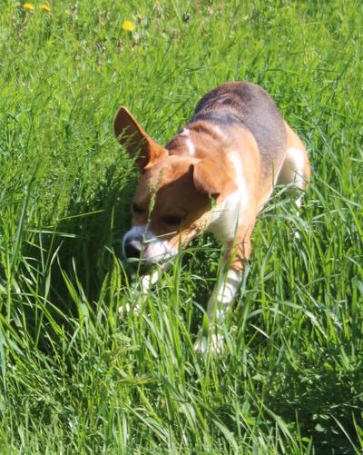 Blog de dyane :Traces de Vie, Grandes herbes