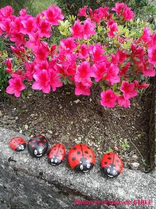 Les petites bêtes, haïkus de Lenaïg et coccinelles de Gibee