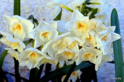 Un bouquet dans mon jardin !