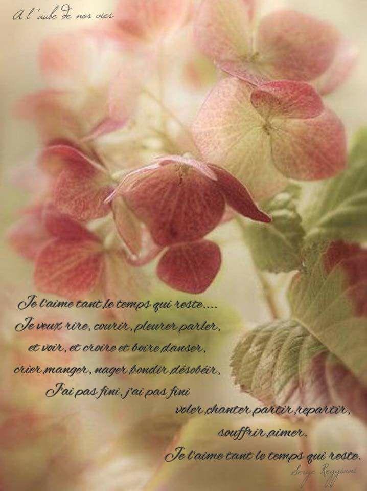 L'image contient peut-être: plante, fleur et texte