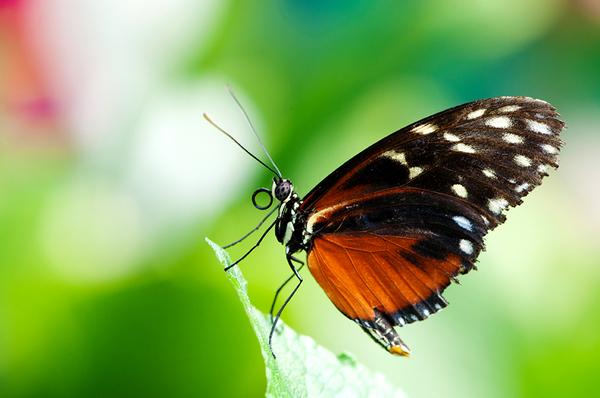 Papillon sur une île ...
