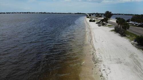 """En Floride, une """"marée rouge"""" décime les dauphins, les tortues et les poissons"""