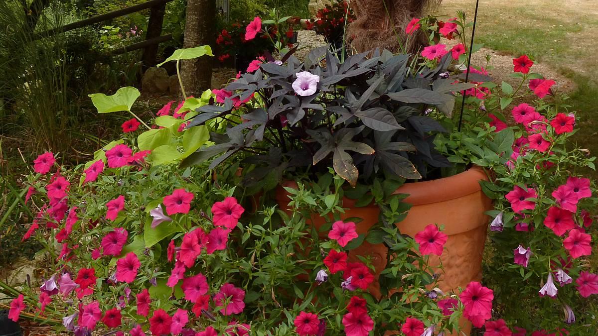 Au jardin de Marithé semaine 35/2013