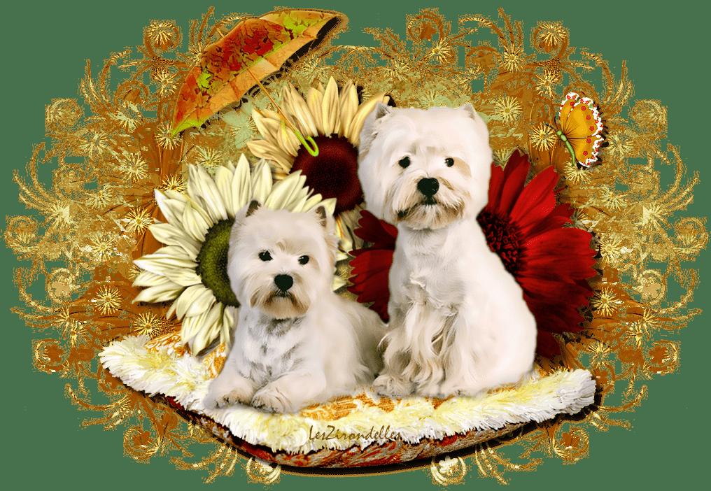 Entêtes automne, Les choupis