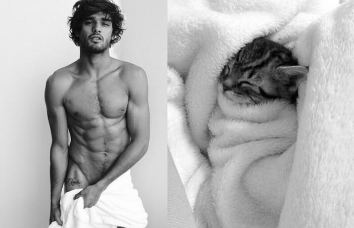 Quand des chats prennent la pose en imitant des mecs sexy, ça donne ça