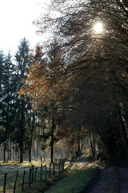 Le Pays des mille Etangs - Haute Saône - coifères - pin - soleil