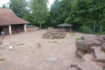 Zoo Saarbrücken 2012 106