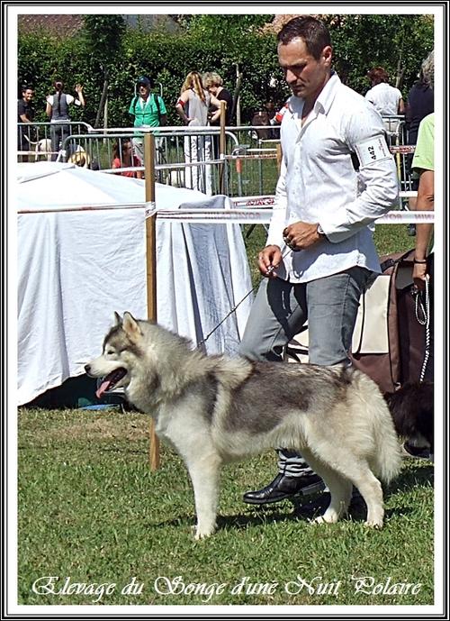 Exposition canine de L'Union (21 juin 2015)