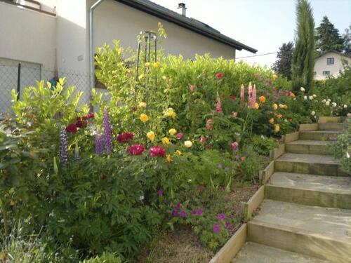 Classement des rosiers du jardin par massif