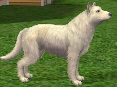 Altz-Alkyn Kün (type Wolf) Comparaison avec le loup de base du jeu