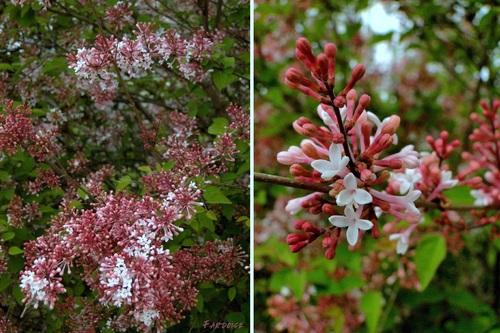 Le printemps en fleurs dans les espaces publics