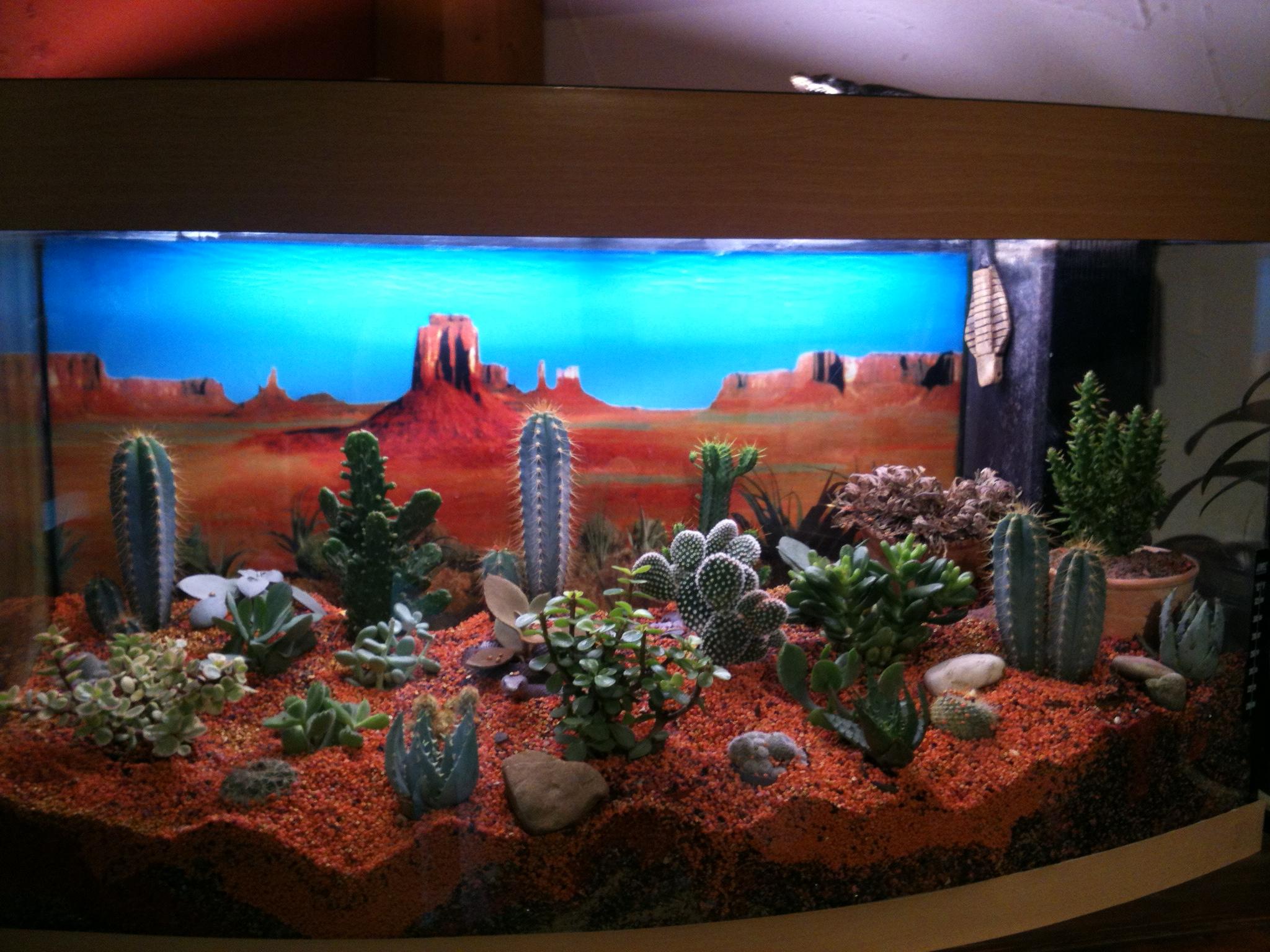 planter cactus dans aquarium. Black Bedroom Furniture Sets. Home Design Ideas
