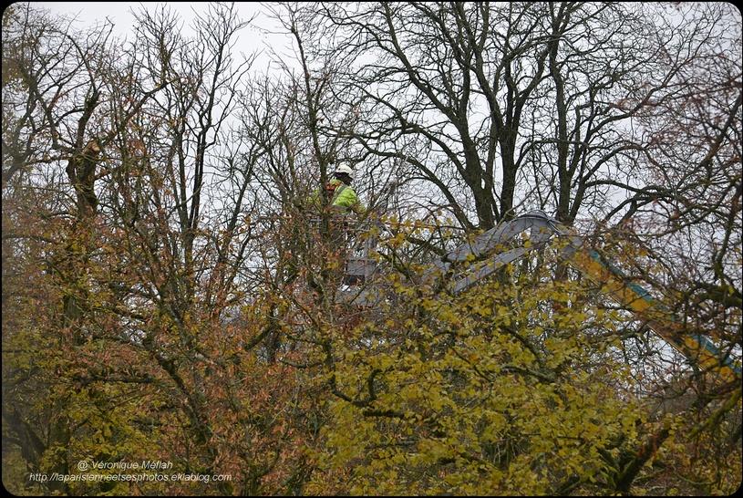 Rambouillet : élagage au Parc du château