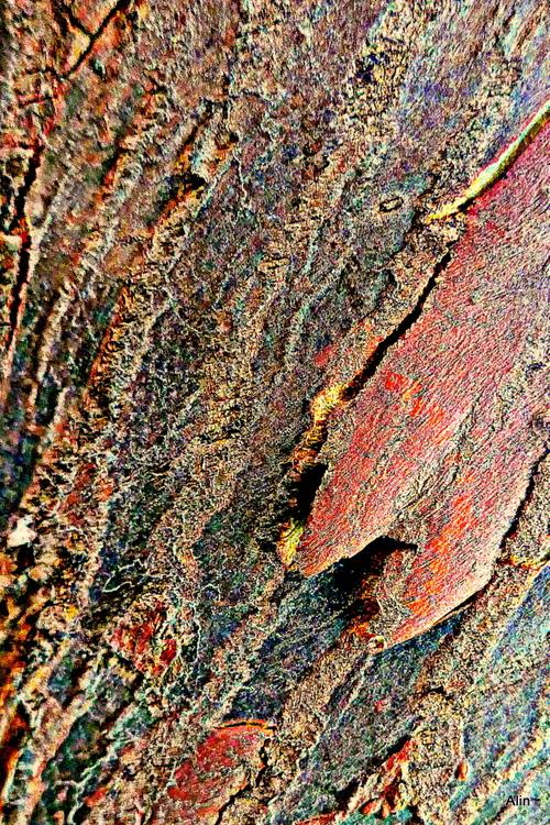 Variations : l'écorce de l'eucalyptus (2)