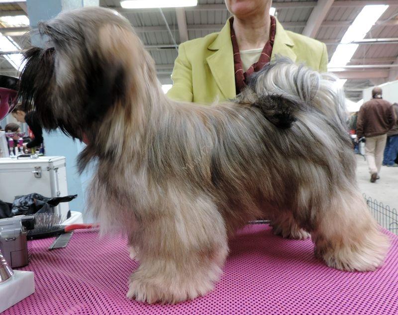 Exposition canine Niort - Février 2014 suite