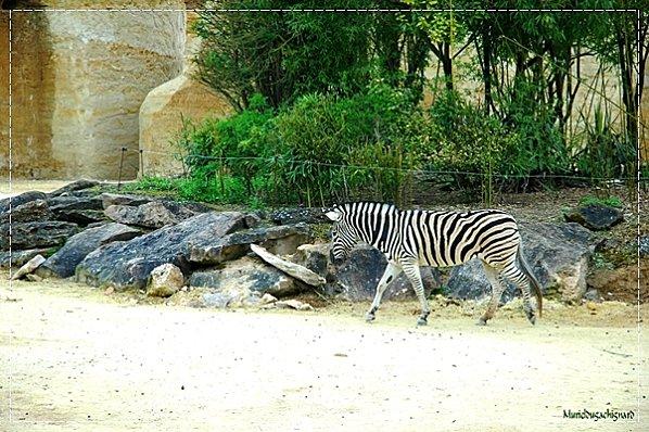 Zoo-Douai 0943