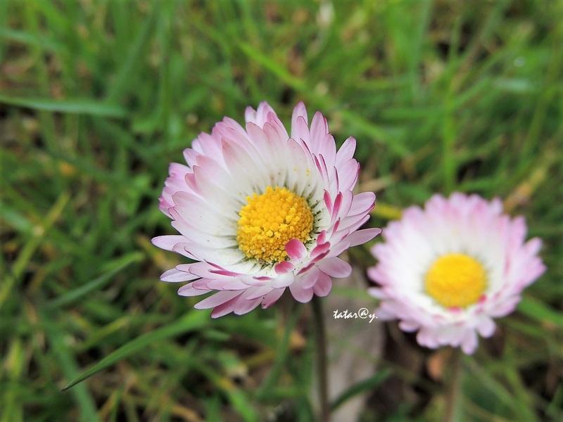 Fleurs printanières.