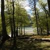 Peu avant l'arrivée au parking, le lac de Bious-Artigues à travers le bois