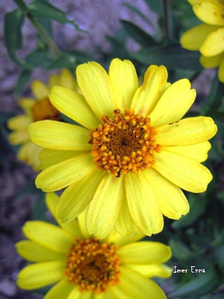 Fleurs 1102