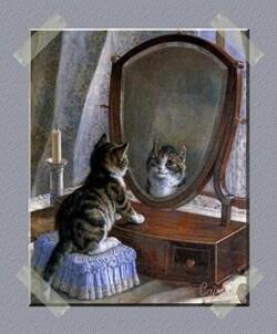 Chat se reflète dans un miroir