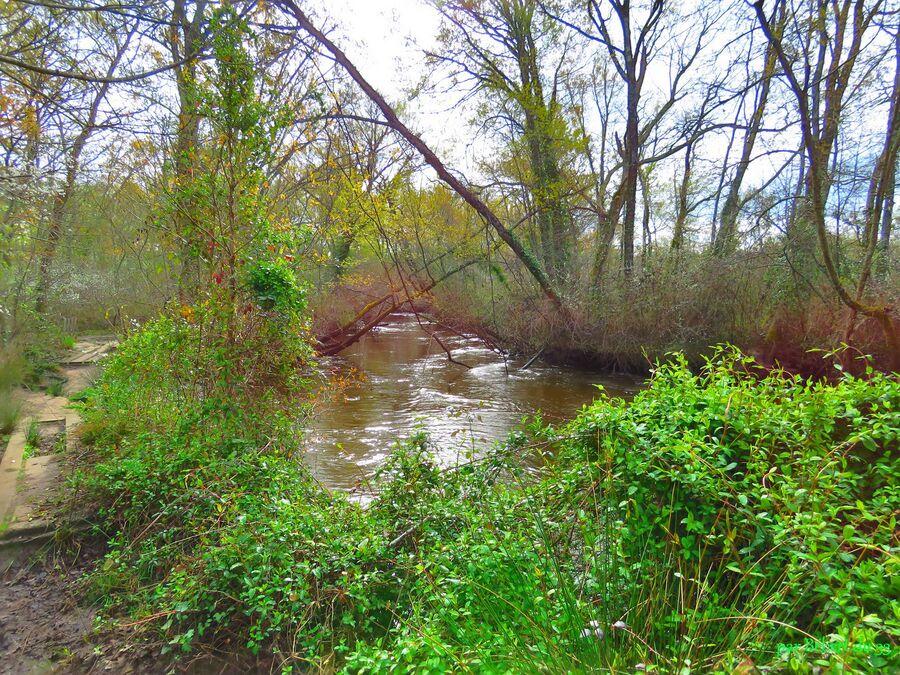 le Teich en Gironde (33) -2