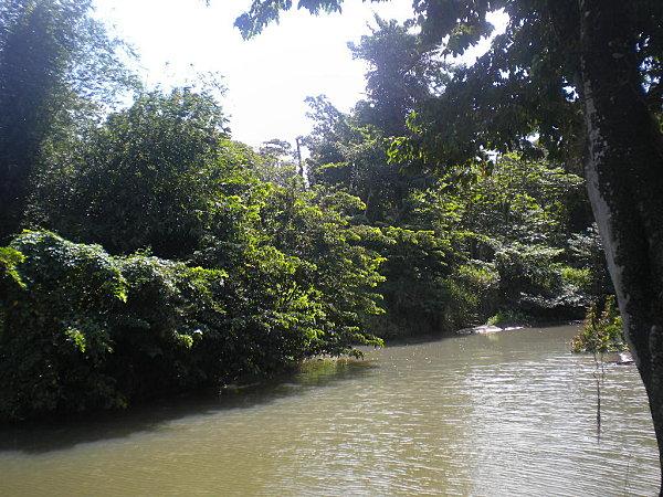 Madinina janvier 2011 730