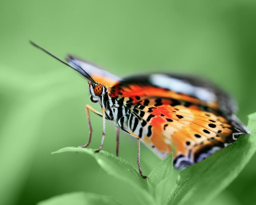 10 Images de Papillons