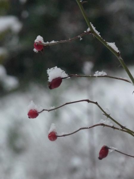 Sous la neige ......