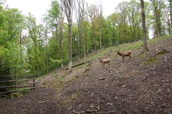 Parc animalier Bouillon 2013 enclos 174