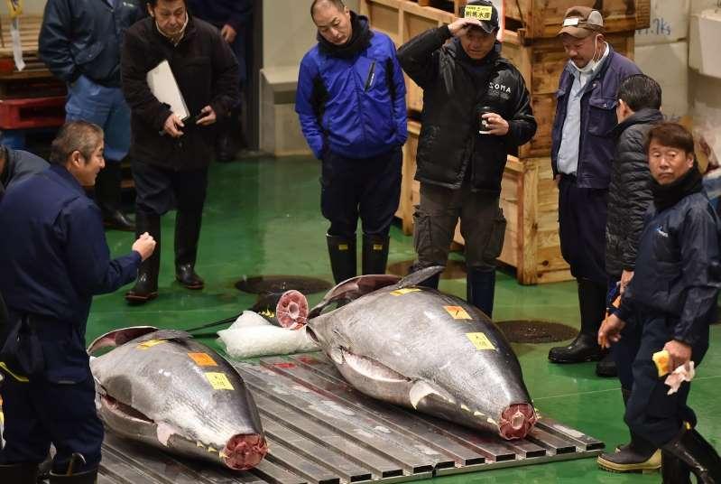 Un thon rouge vendu 2,7 millions d'euros aux enchères au Japon