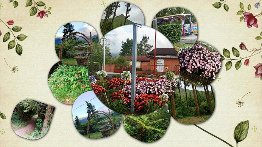 14/10/19 : Forêt de Bébour 3/5 (Réunion) - Blagues diverses