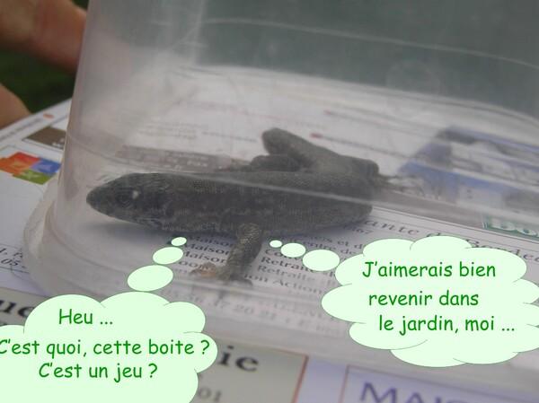 Vacances : merci Danielle et les =^.^=