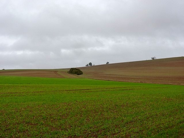 Moselle en automne 16 Marc de Metz 16 10 2012