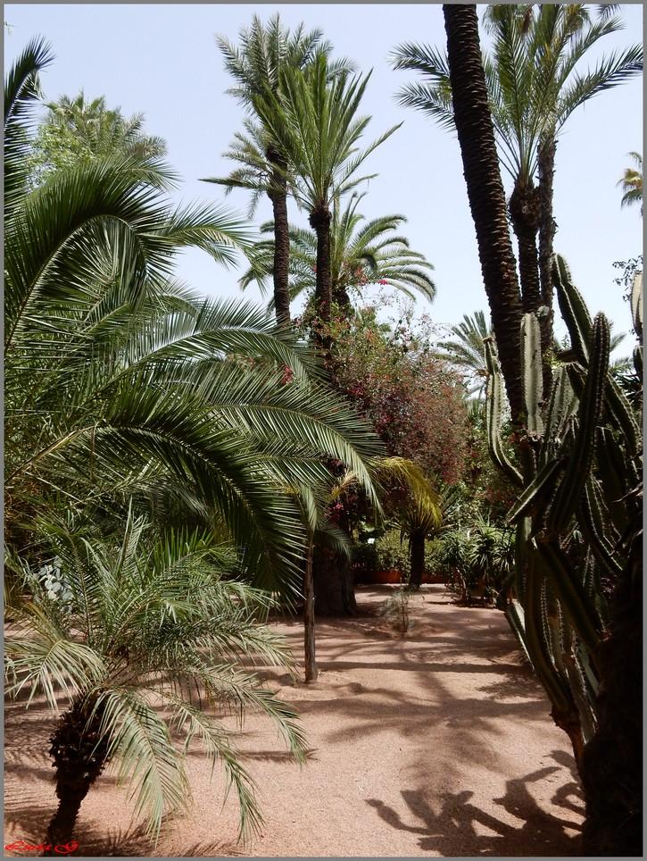 Jardin Majorelle.....