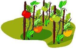 L'Ortie : Plante aux mille vertus !